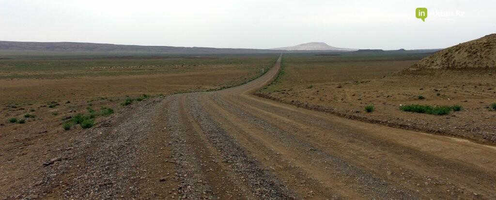 Мангистауская степь проснулась (ФОТО), фото-4