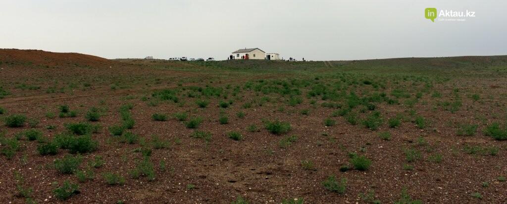 Мангистауская степь проснулась (ФОТО), фото-9