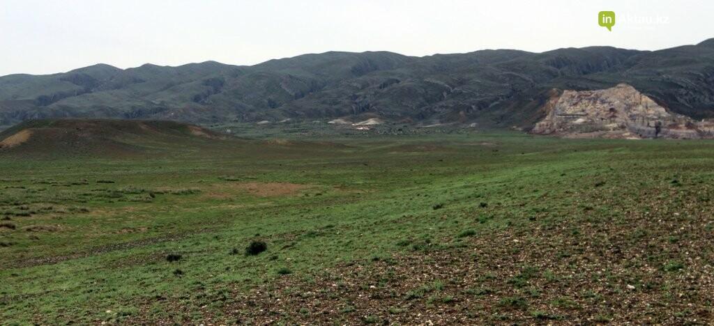 Мангистауская степь проснулась (ФОТО), фото-12