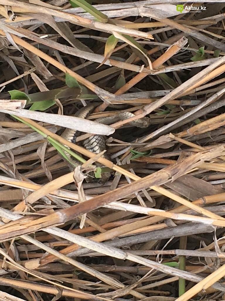 Опасное соседство: люди заполонили места обитания морских ужей в Актау (ВИДЕО), фото-7