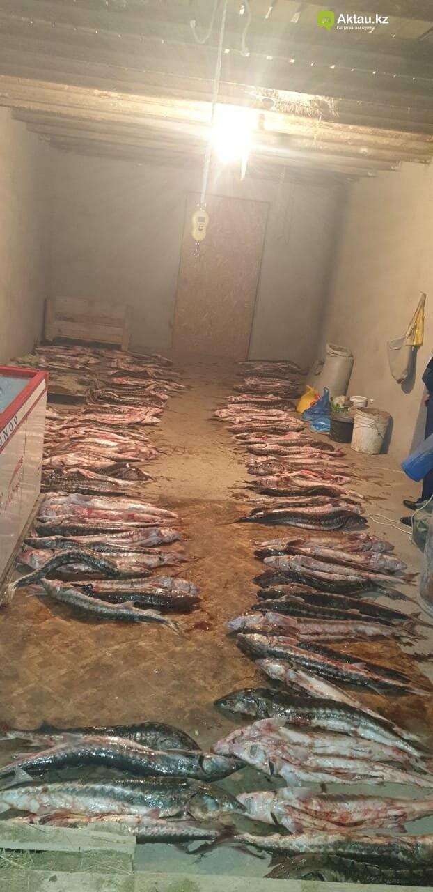 Почти тонну осетра обнаружили полицейские в доме у жителя Мангистау, фото-1
