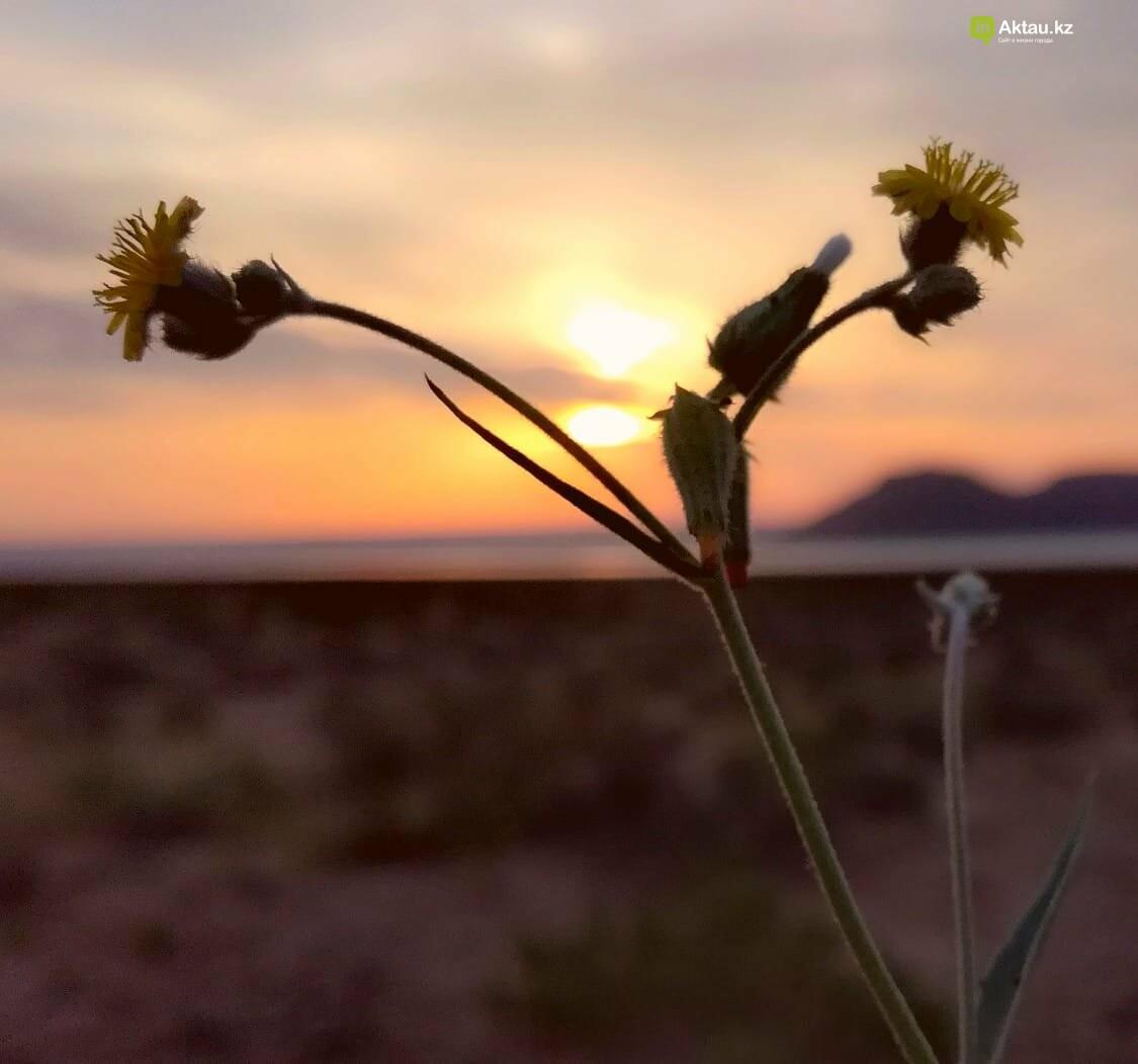 Красота под ногами:  Карынжарык (ФОТО), фото-4