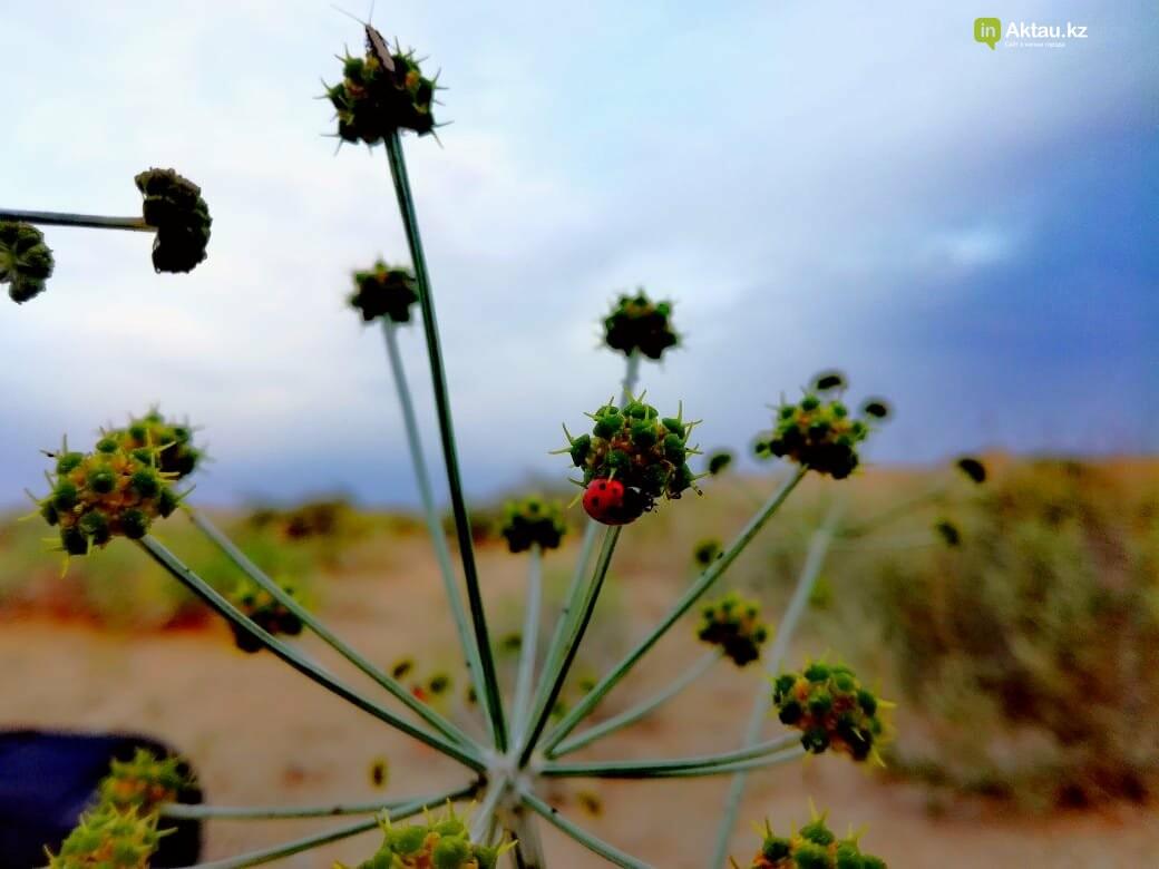 Красота под ногами:  Карынжарык (ФОТО), фото-10