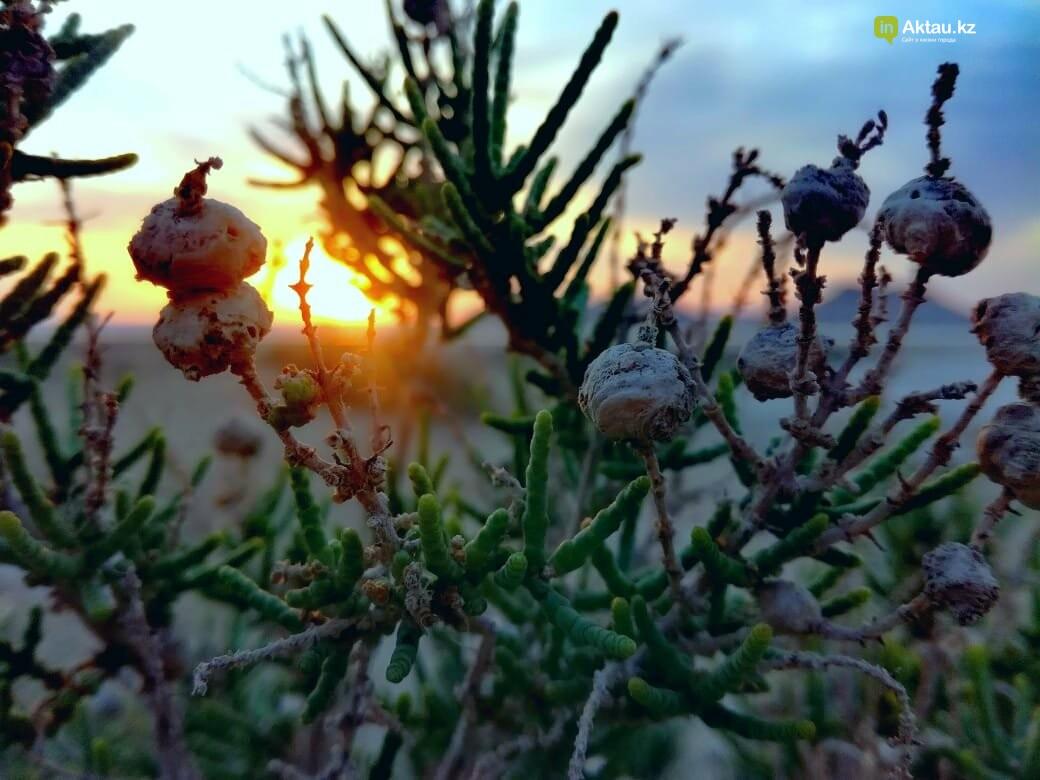 Красота под ногами:  Карынжарык (ФОТО), фото-11