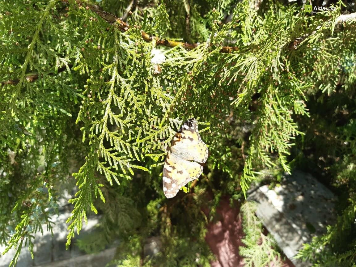 Бабочки заполонили Актау , фото-2