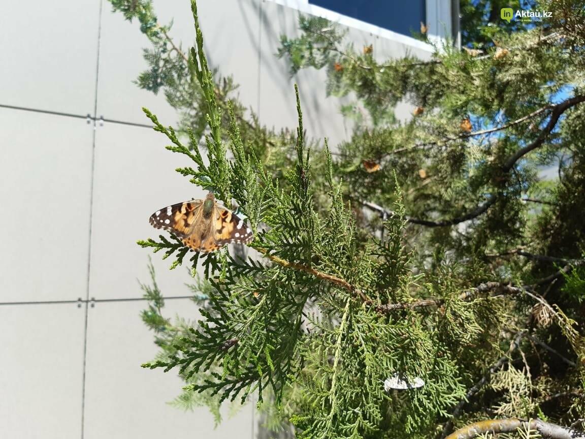 Бабочки заполонили Актау , фото-1