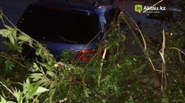 В Актау мужчина сломал деревья, чтобы припарковать свой автомобиль (ФОТО), фото-6