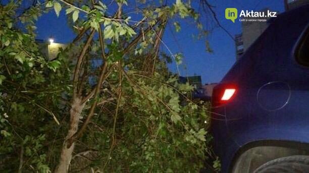 В Актау мужчина сломал деревья, чтобы припарковать свой автомобиль (ФОТО), фото-4