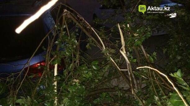 В Актау мужчина сломал деревья, чтобы припарковать свой автомобиль (ФОТО), фото-2