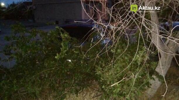 В Актау мужчина сломал деревья, чтобы припарковать свой автомобиль (ФОТО), фото-3