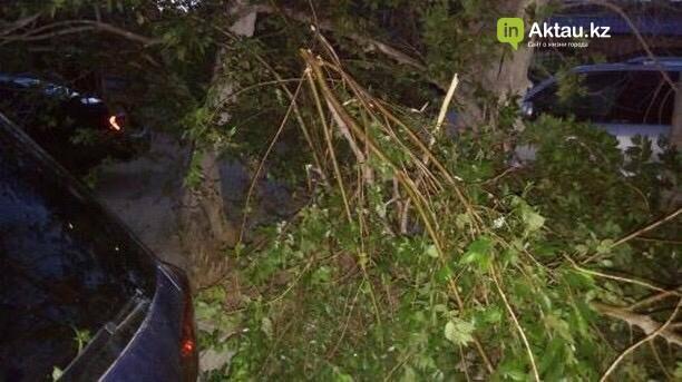 В Актау мужчина сломал деревья, чтобы припарковать свой автомобиль (ФОТО), фото-1