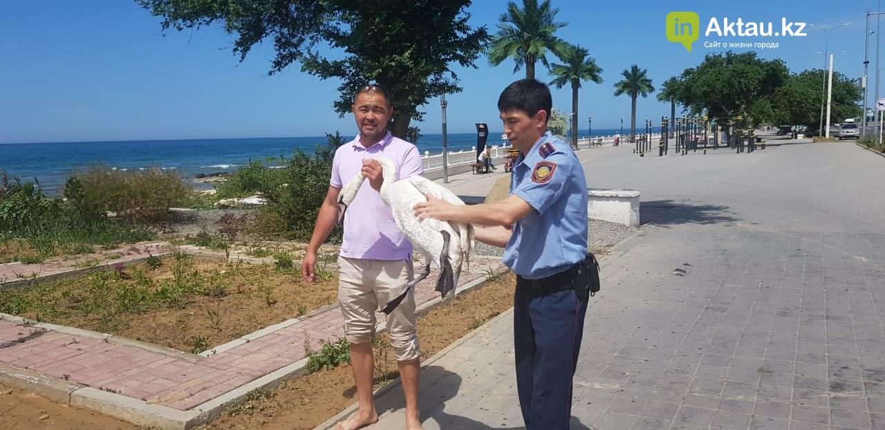 Полицейские спасли одинокого лебедя в Актау, фото-1