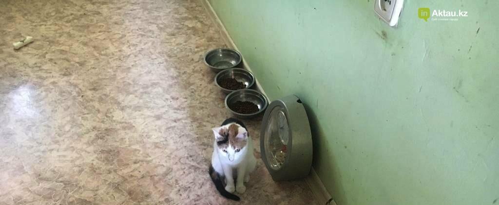 Стреляли в кошек прямо в квартире: в Актау соседка ополчилась против кошатницы (ВИДЕО), фото-2