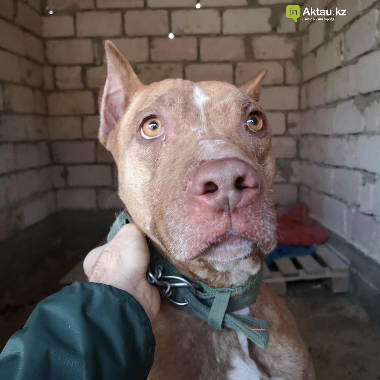 В Актау собаку заварили в металлический ящик и оставили на улице (ВИДЕО), фото-1