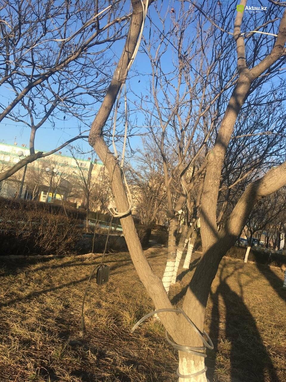 Новый год в Актау никак не закончится, фото-2