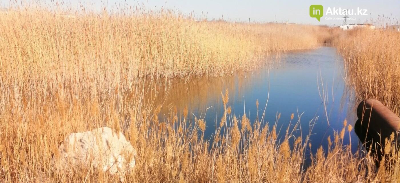 Слив нечистот в Кайспий: экологи дали  заключение, фото-1