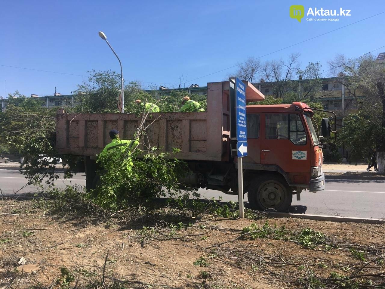 Самую зеленую аллею в Актау может заменить газон, фото-2