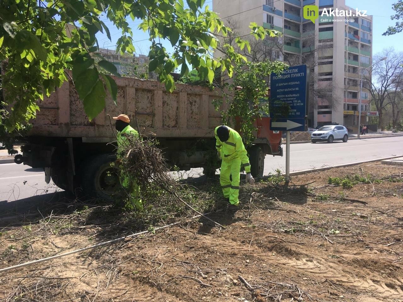 Самую зеленую аллею в Актау может заменить газон, фото-4