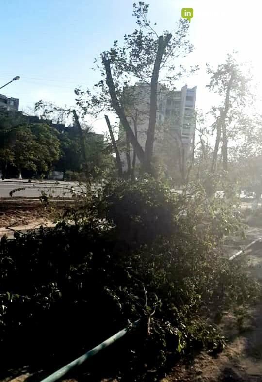 """Зачем на самой зеленой аллее Актау у деревьев срезали крону, рассказали в ОО """"Атамекен"""", фото-1"""