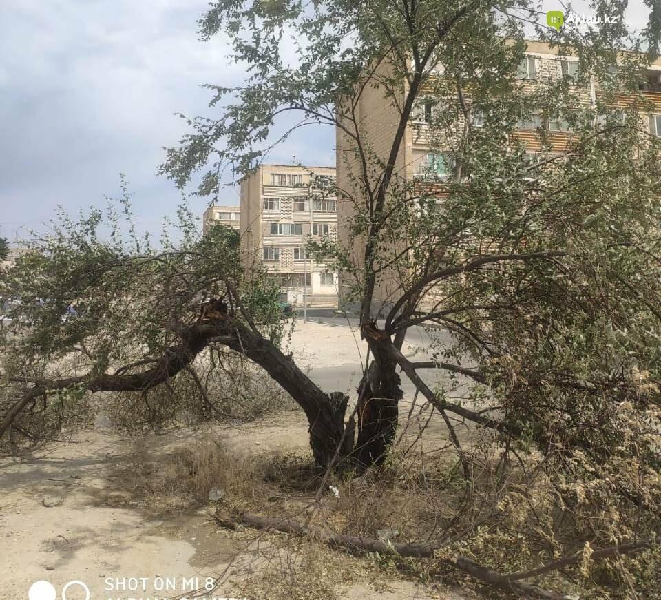 Полив деревьев в Актау - это фарс и очковтирательство: экологи обращаются в генеральную прокуратуру , фото-1