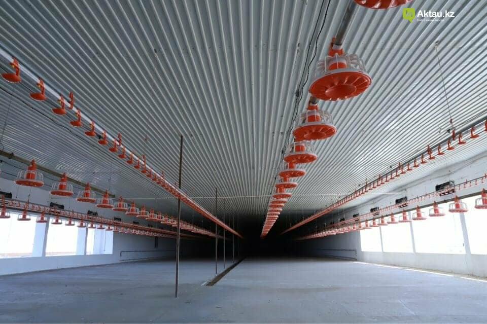 В Мангистау в этом году планируют сдать в эксплуатацию новую птицефабрику, фото-1