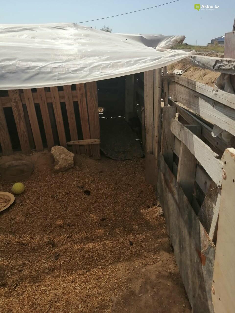 Волонтеры в Актау просят горожан помочь со строительством ограждения в приюте , фото-1