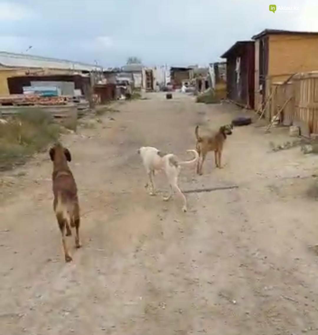 В Актау ограбили приют для собак , фото-2