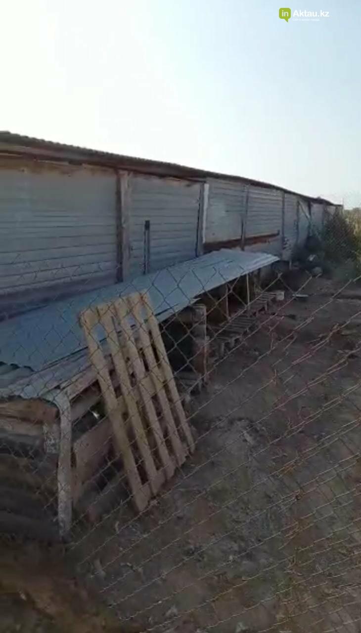 В Актау ограбили приют для собак , фото-1