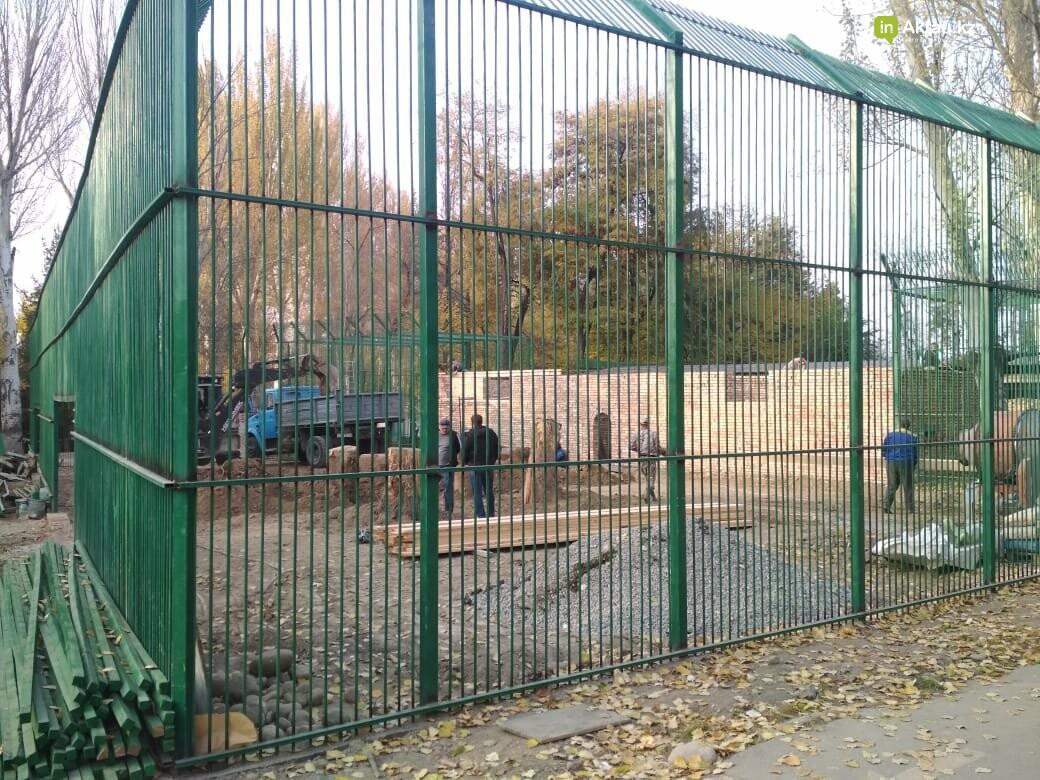 В Алматинском зоопарке завершают строительство вольера для львенка Симбы, фото-3