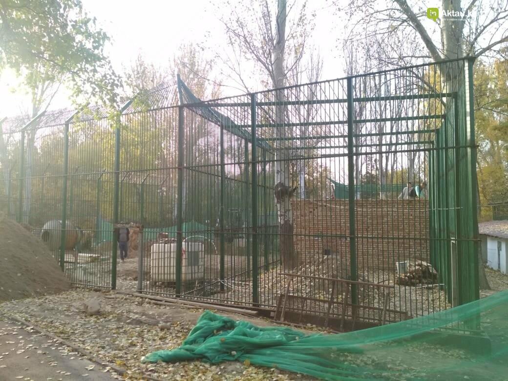В Алматинском зоопарке завершают строительство вольера для львенка Симбы, фото-2