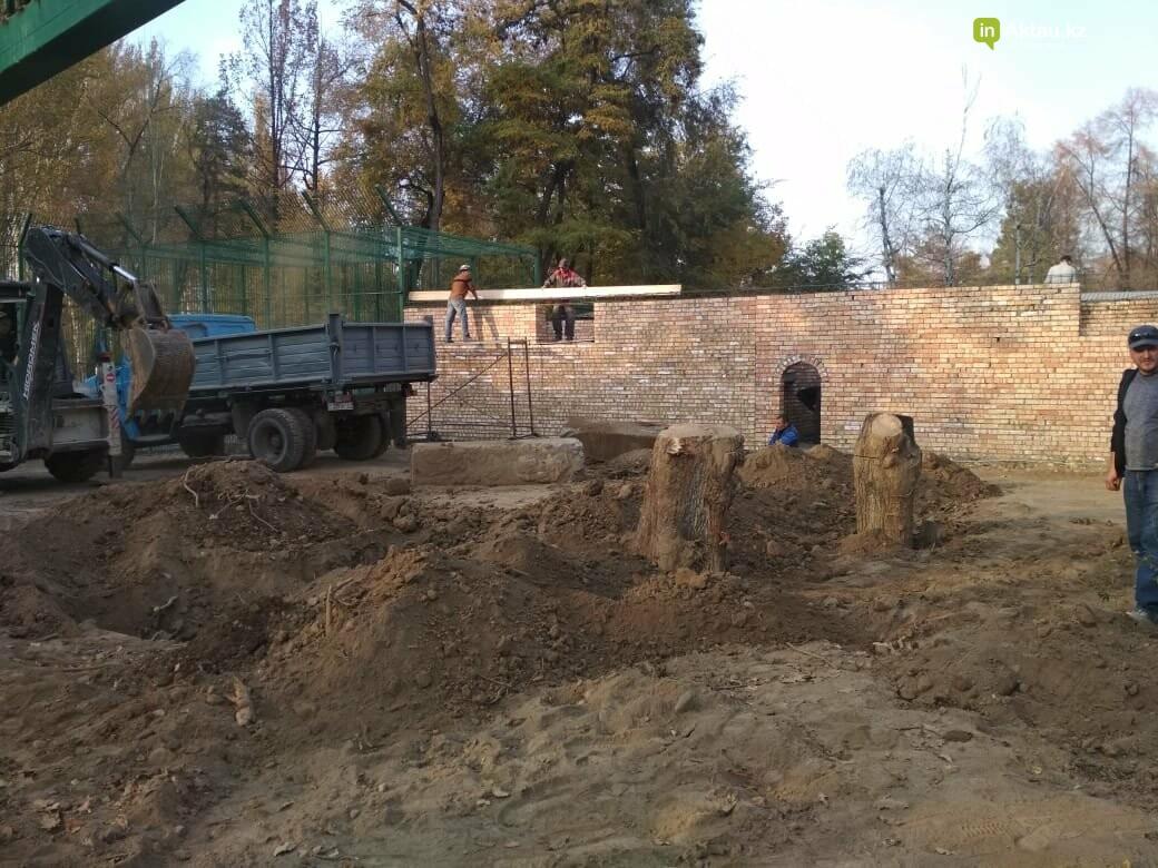 В Алматинском зоопарке завершают строительство вольера для львенка Симбы, фото-4