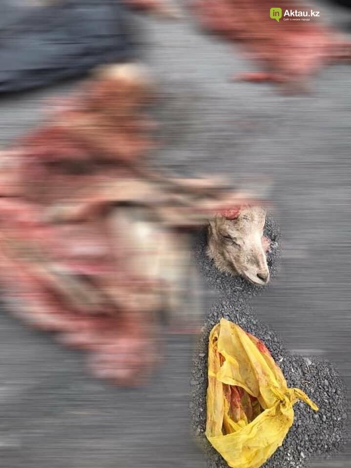 В Мангистау задержали браконьеров с тушами краснокнижных архаров, фото-3