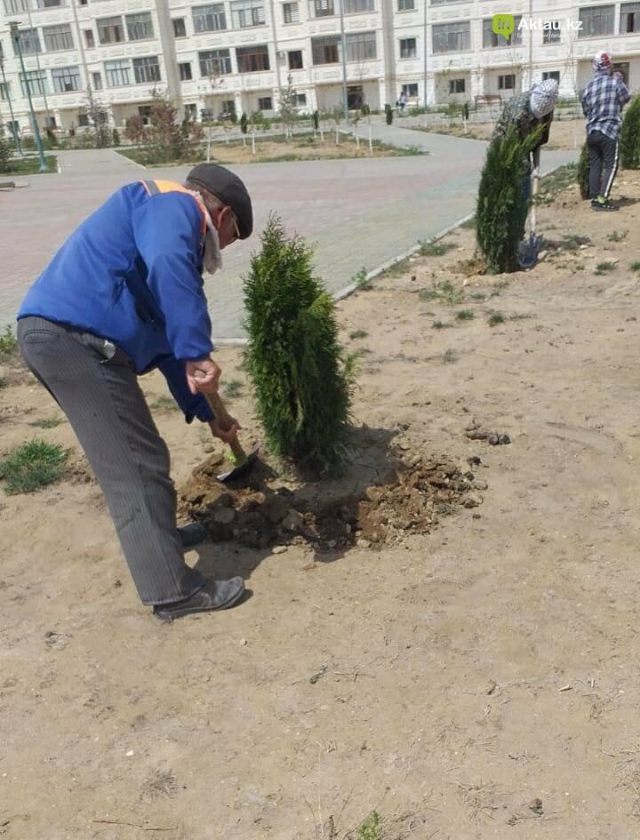 В Актау на площади «Ынтымак» «выдрали» деревья – очевидцы, фото-1, Акимат Актау