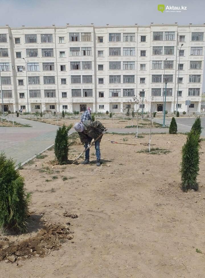 В Актау на площади «Ынтымак» «выдрали» деревья – очевидцы, фото-2, Акимат Актау