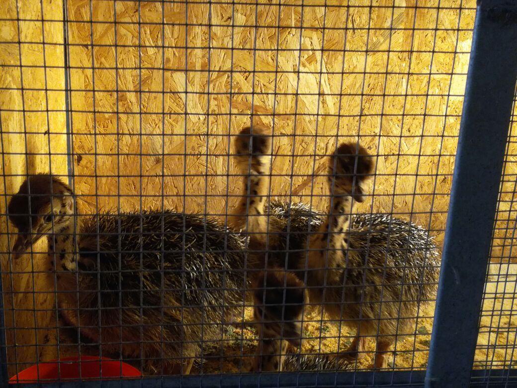 Мангистауский фермер будет кормить туристов страусиными яйцами (Видео), фото-5
