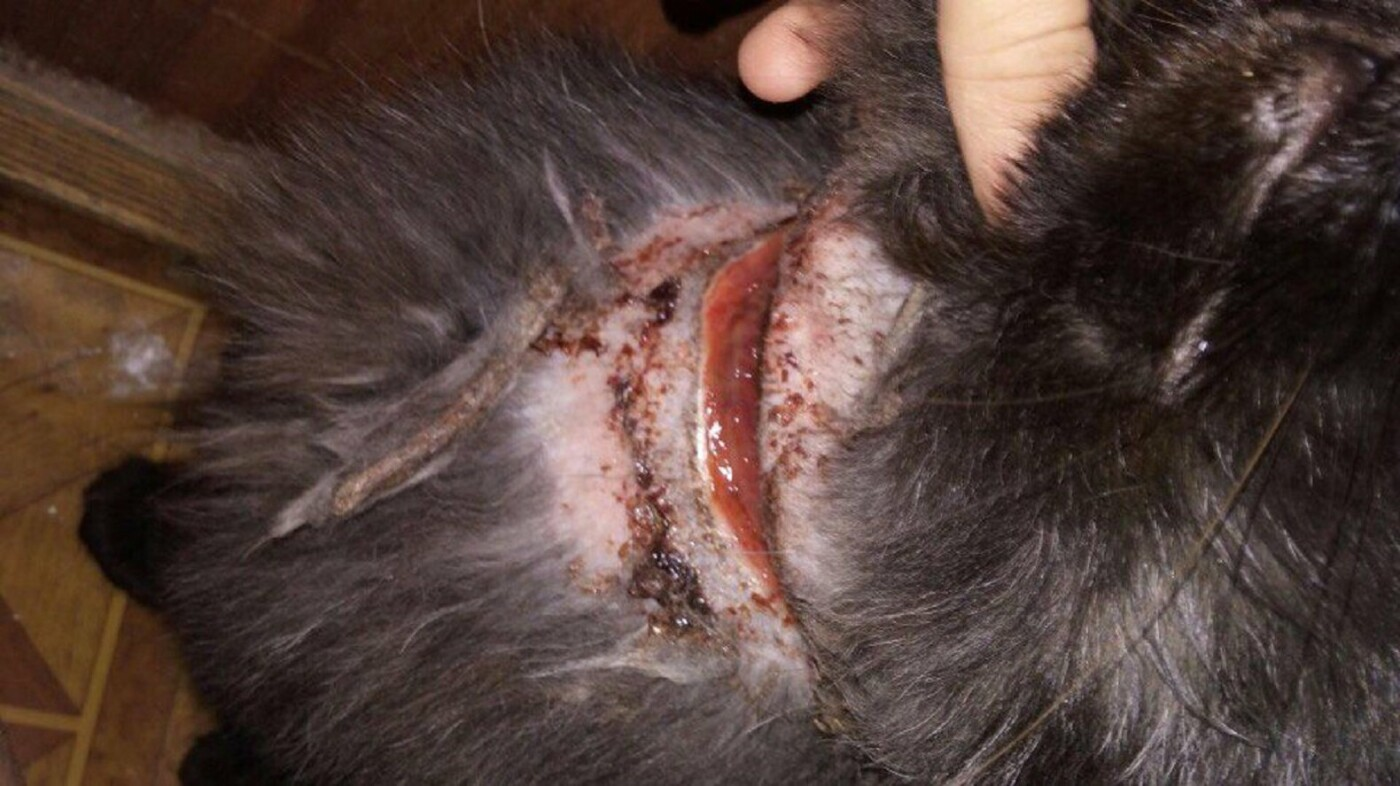 В Актау живодеры перерезали горло коту и бросили умирать на улице, фото-1