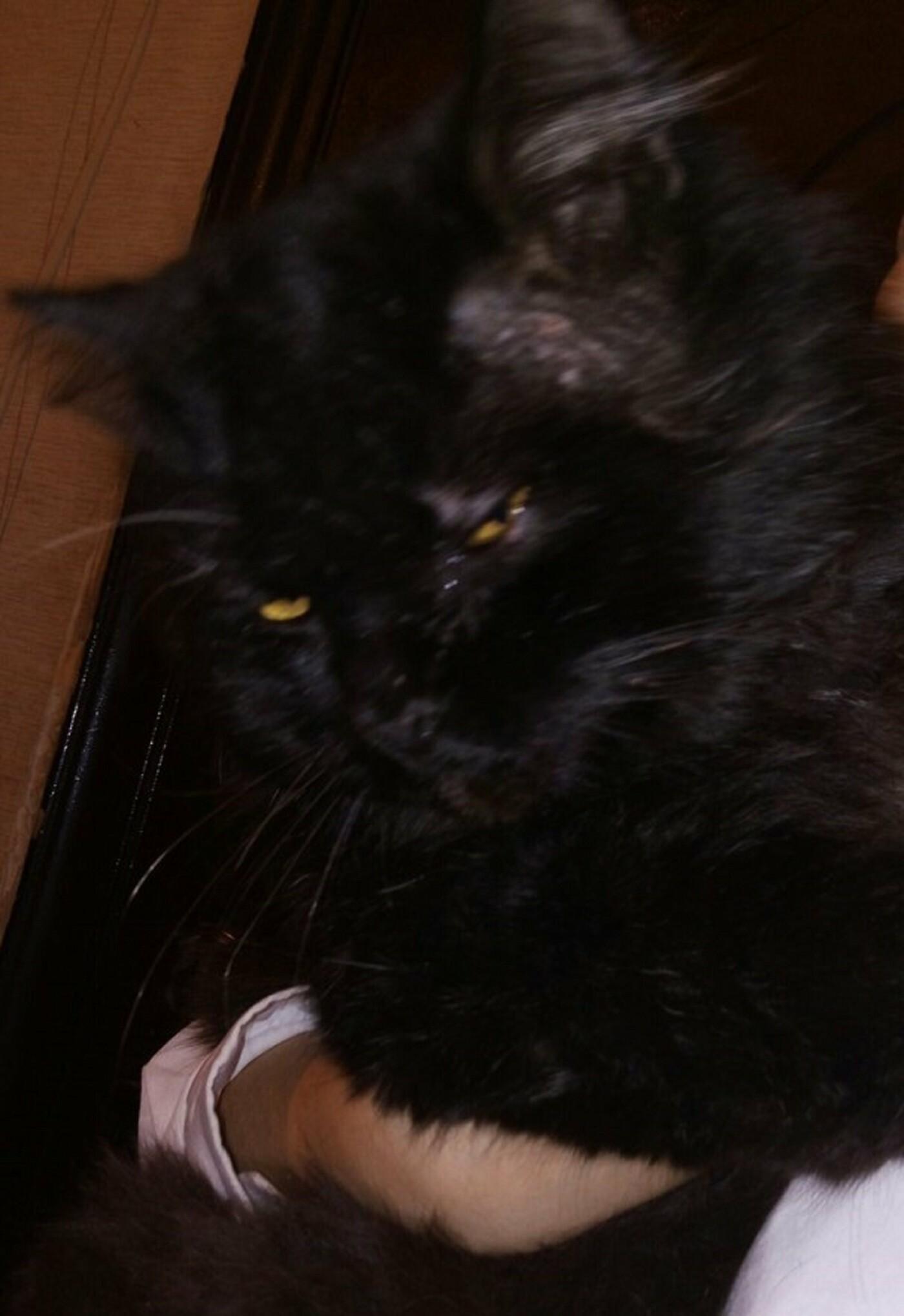 В Актау живодеры перерезали горло коту и бросили умирать на улице, фото-3