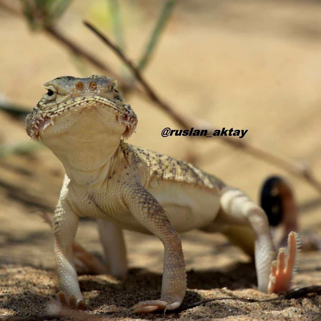 Маленькие хранители степей Мангистау, фото-6