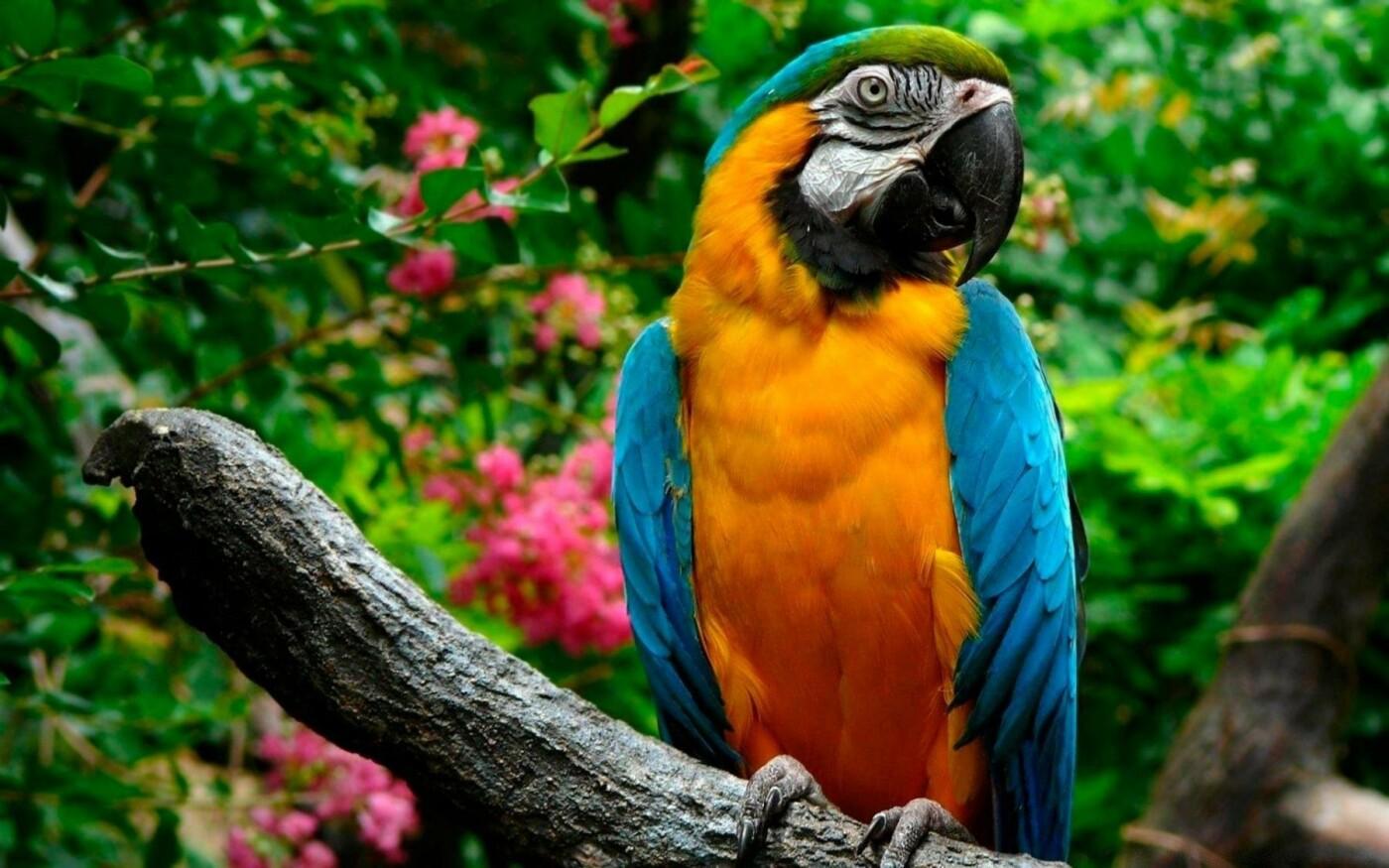 Уикенд в Актау: фестиваль пенного лета, экзотические птицы и мастер-классы, фото-1