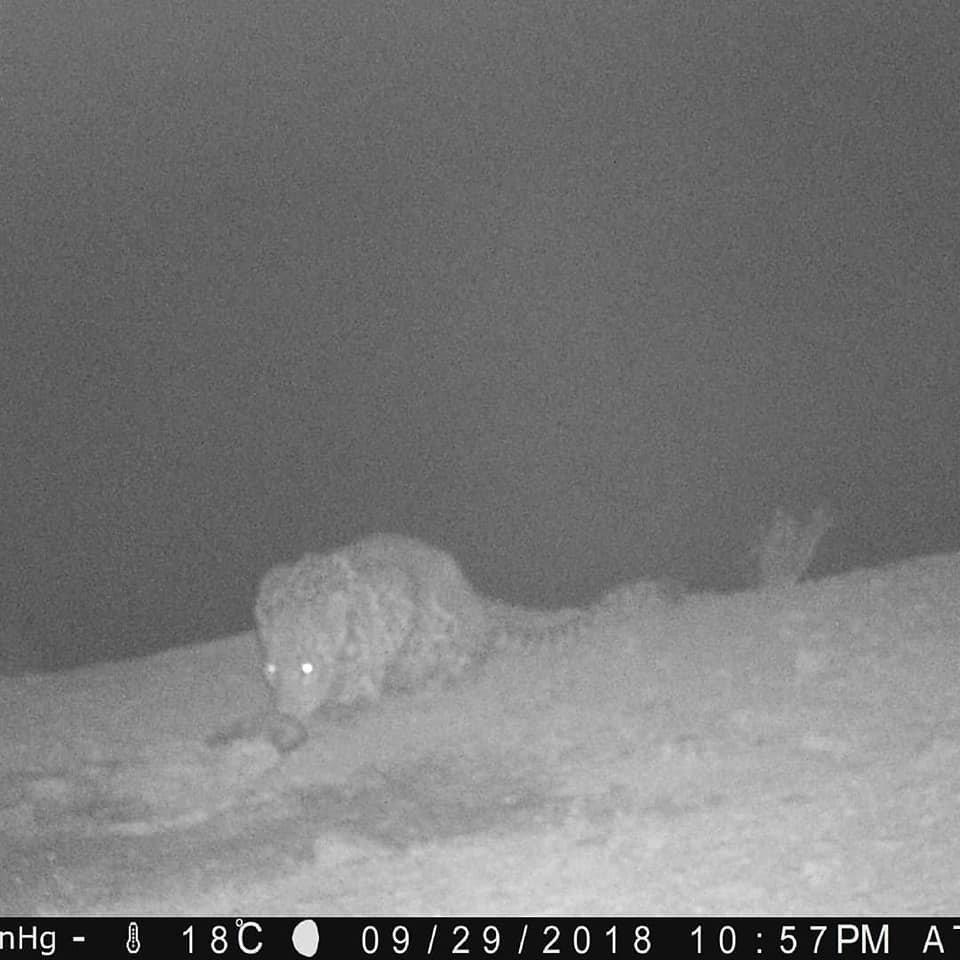 Леопард попал в объектив фотоловушки на Устюртском заповеднике (ФОТО), фото-1