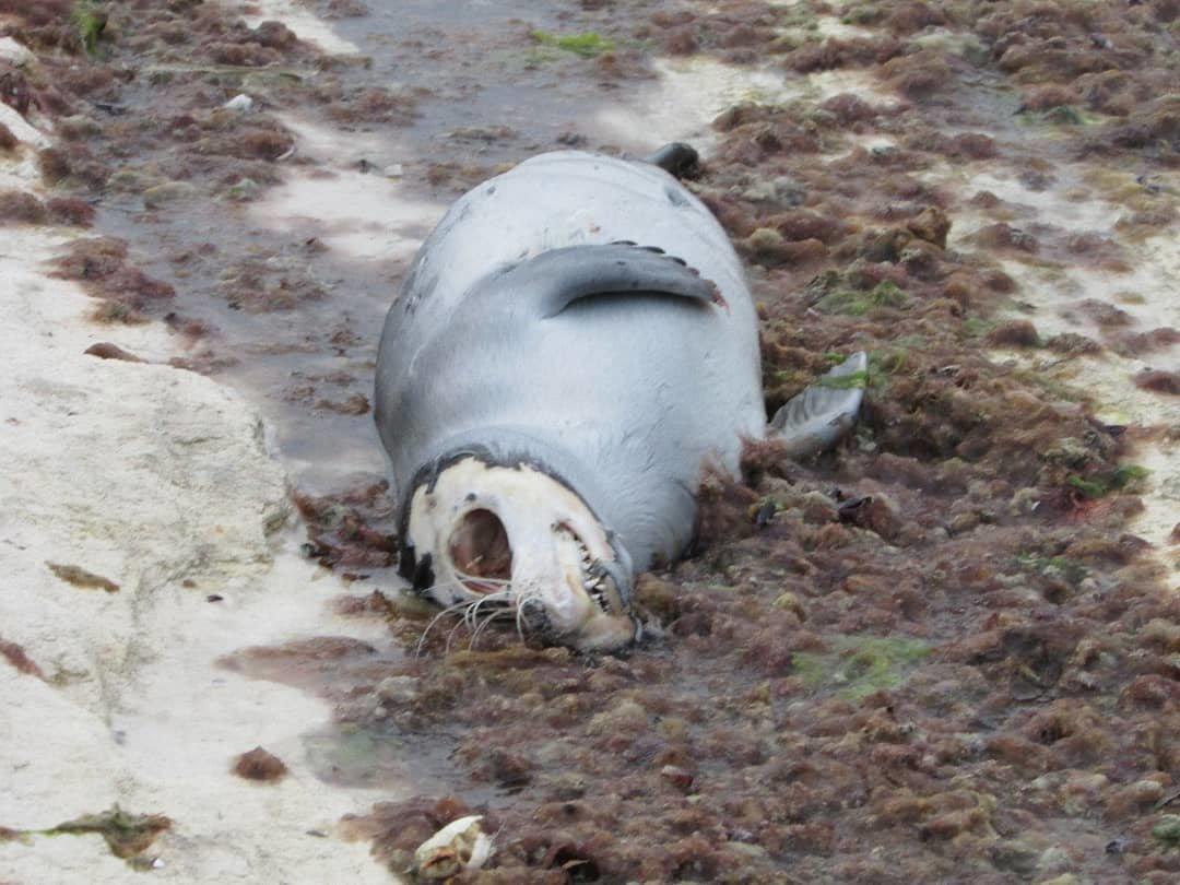 Еще одного мертвого тюленя обнаружили жители Актау, фото-1