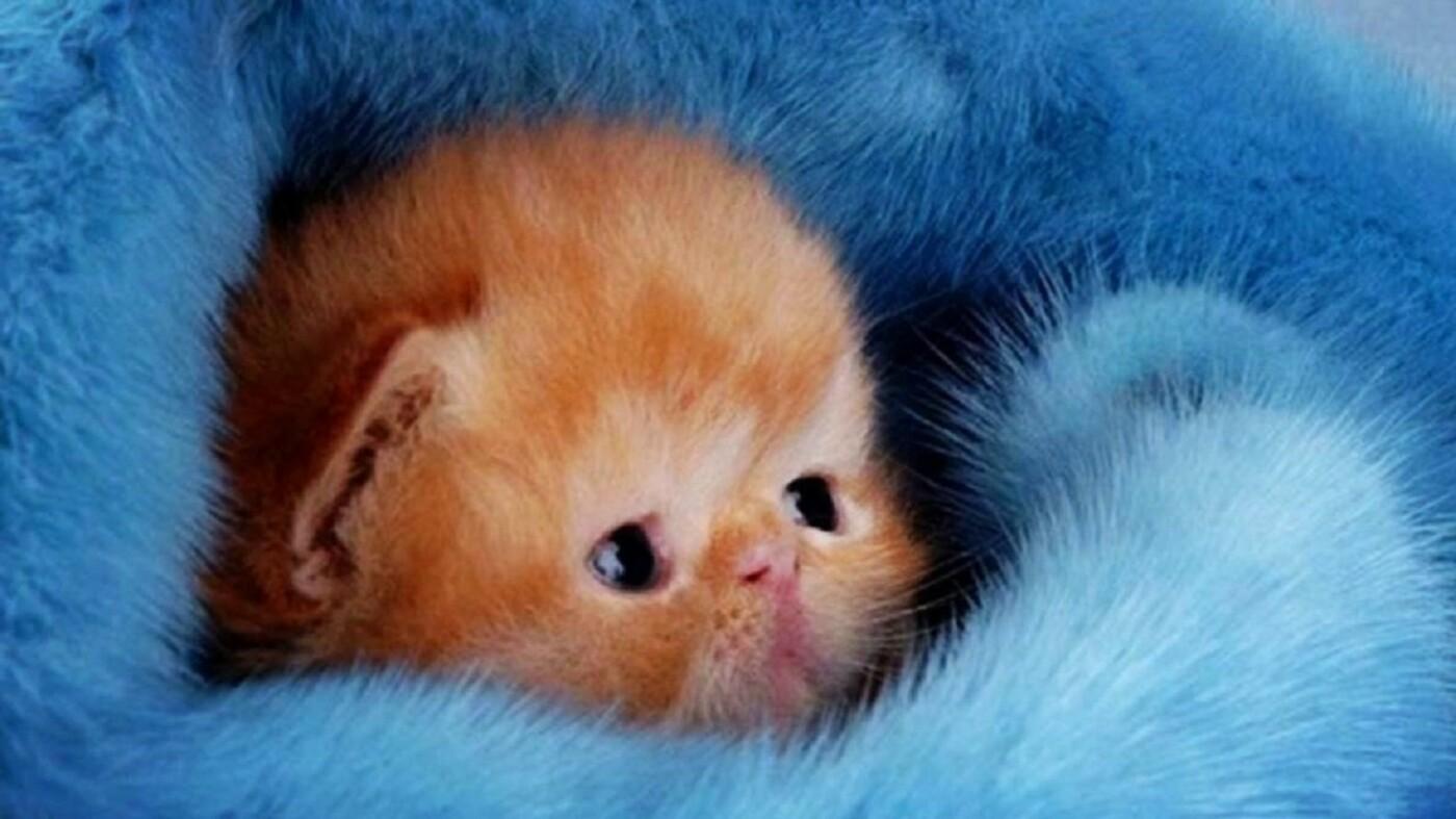 Какие болезни может вылечить домашняя кошка, фото-2