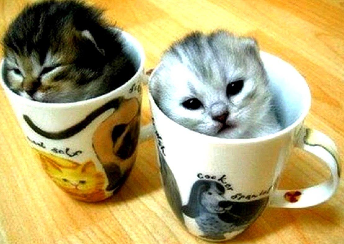 Какие болезни может вылечить домашняя кошка, фото-1