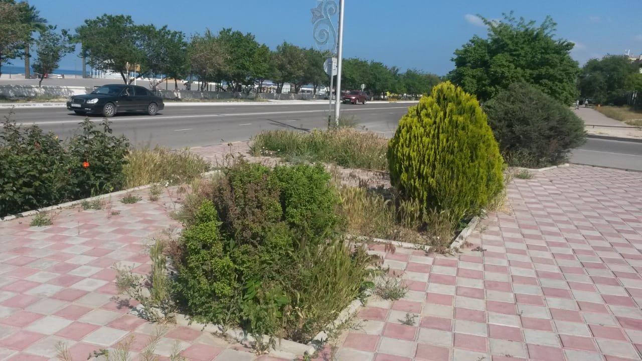 Миллионные тендера на озеленение: Актау снова порос сорняком, фото-1