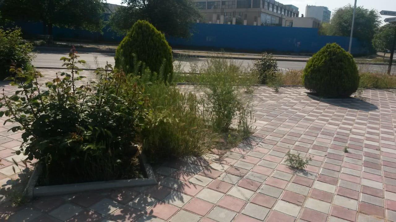 Миллионные тендера на озеленение: Актау снова порос сорняком, фото-3