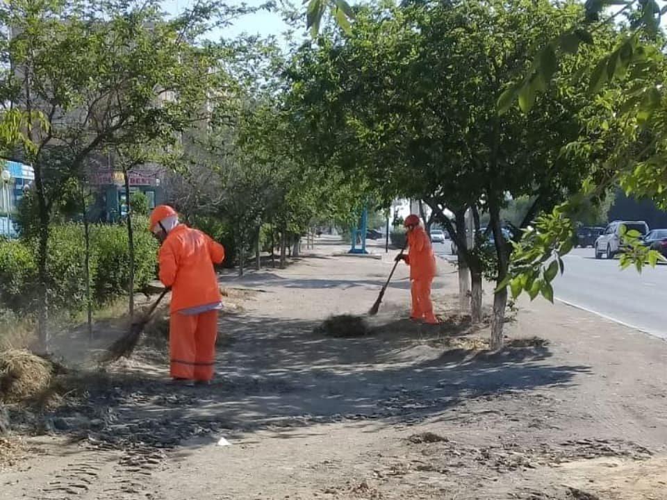 Миллионные тендера на озеленение: Актау снова порос сорняком, фото-5