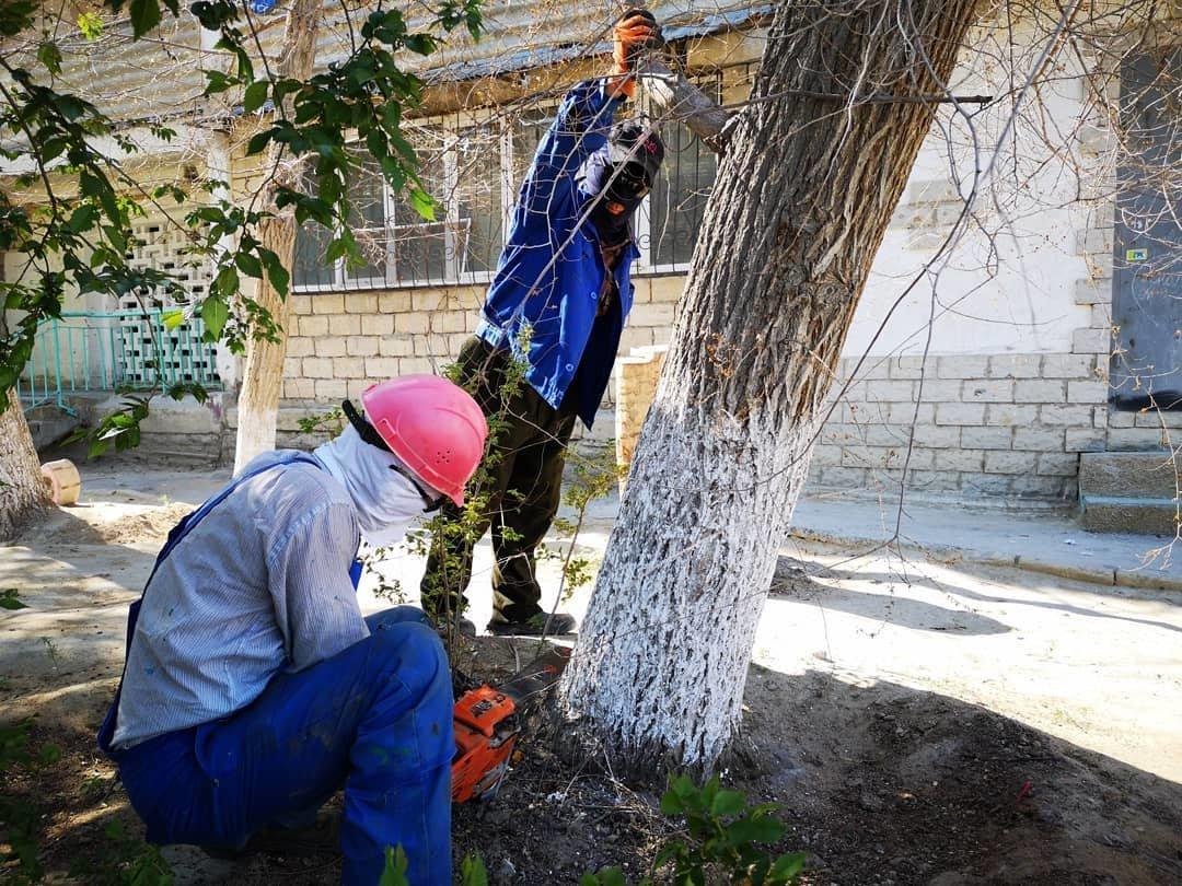 Миллионные тендера на озеленение: Актау снова порос сорняком, фото-6