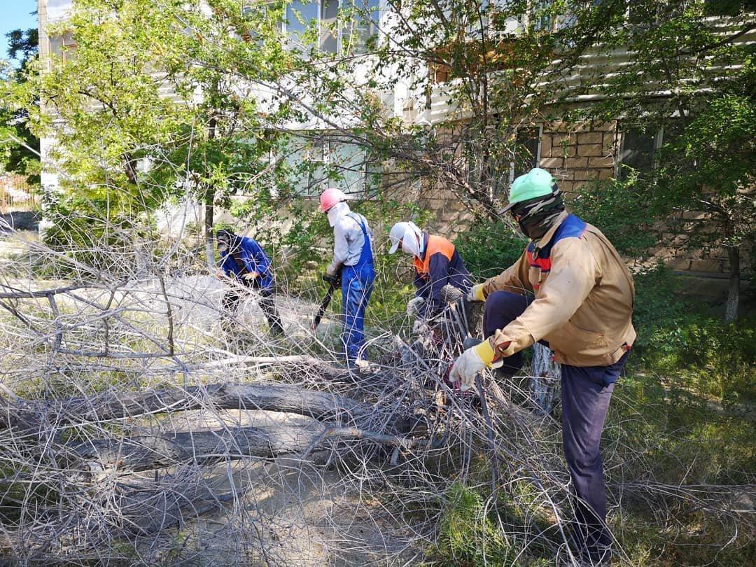 Миллионные тендера на озеленение: Актау снова порос сорняком, фото-8