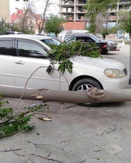 В Актау дерево чуть не раздавило автомобиль, фото-3