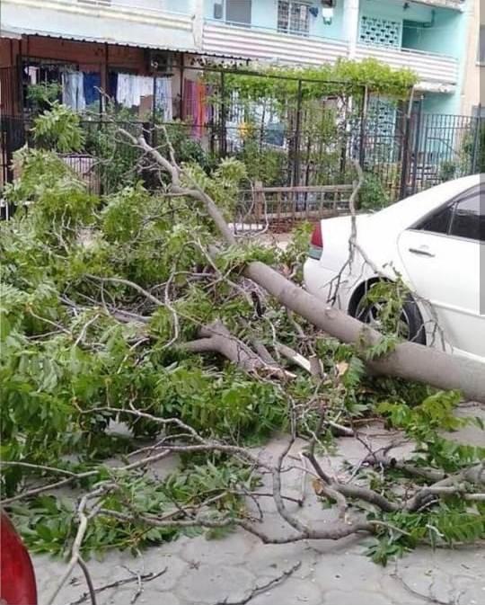 В Актау дерево чуть не раздавило автомобиль, фото-1
